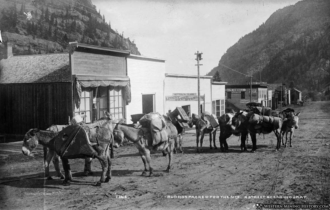 Burros packed for the mountains. A street scene in Ouray, Colorado