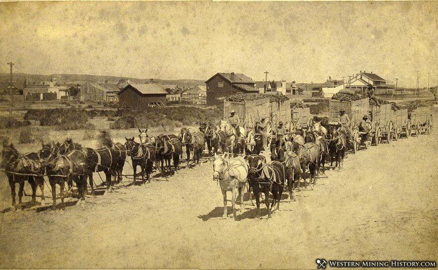 Ore wagons at Tuscarora, Nevada ca. 1890