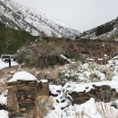 Ophir Nevada