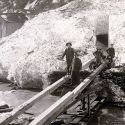 Tunnel through the snow - mace, Idaho 1910