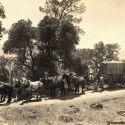 Freight Wagon Heading to Forbestown