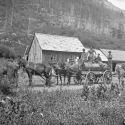 Mule-drawn wagon at Sneffels