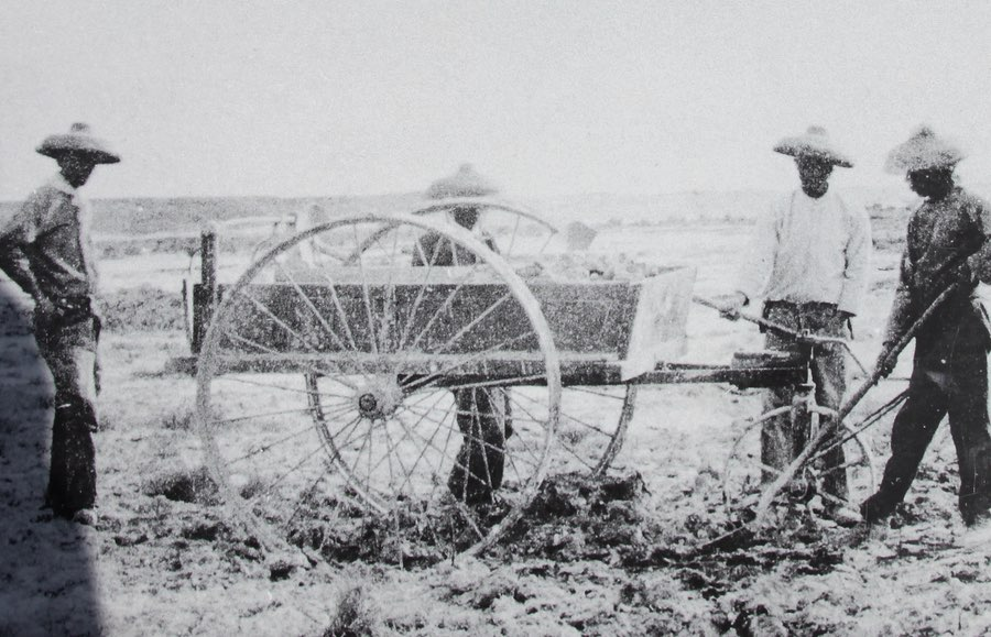 Chinese laborers harvesting borax