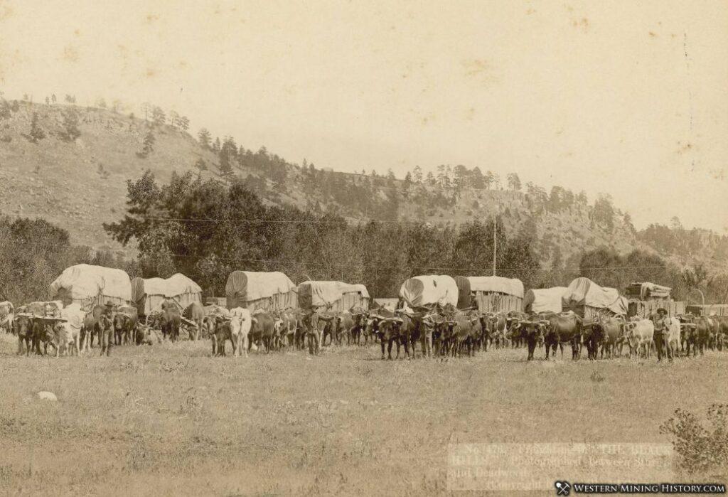 Freighting between Deadwood and Sturgis, South Dakota 1878
