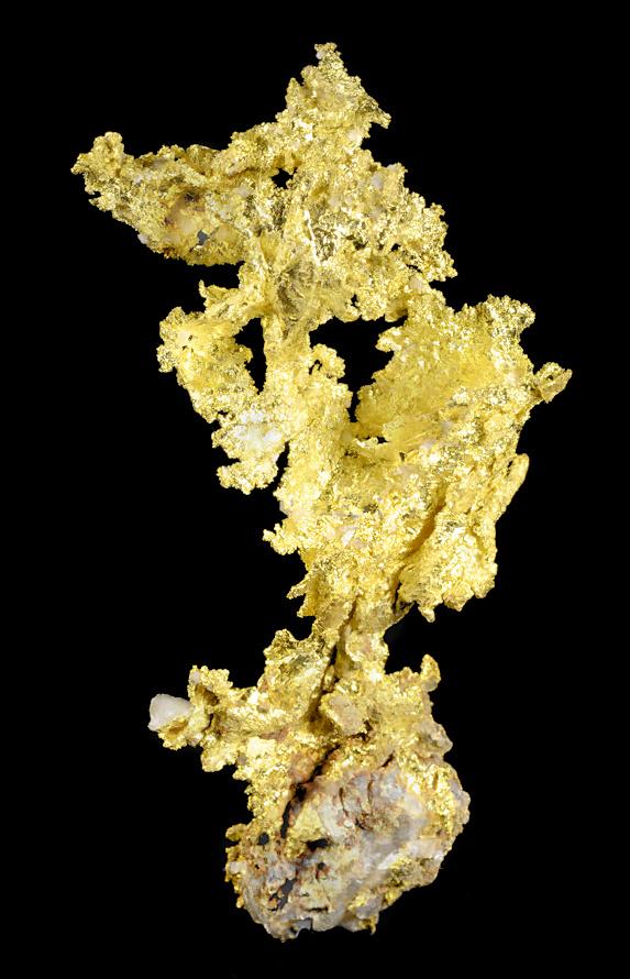 Crystalline native leaf gold on white quartz matrix